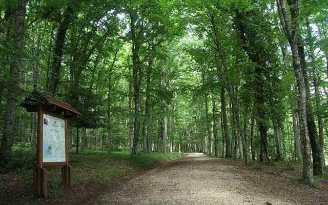 scorcio foresta umbra